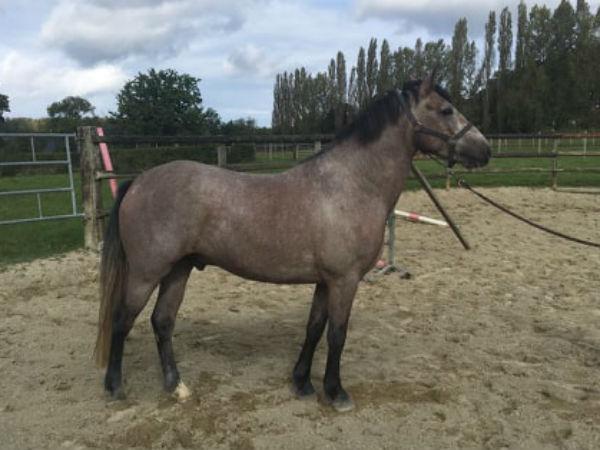 Nouveau poney aux écuries