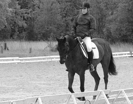 cheval arabe dressage a vendre